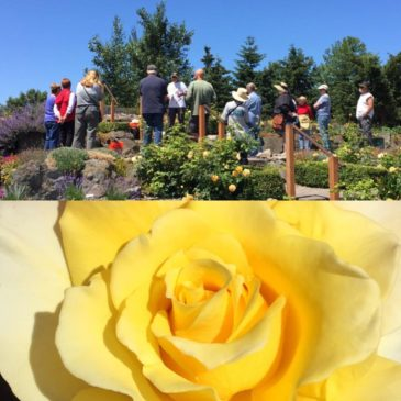 "June 23 Rose ""Work to Learn"" Party at Sequim Botanical Garden"