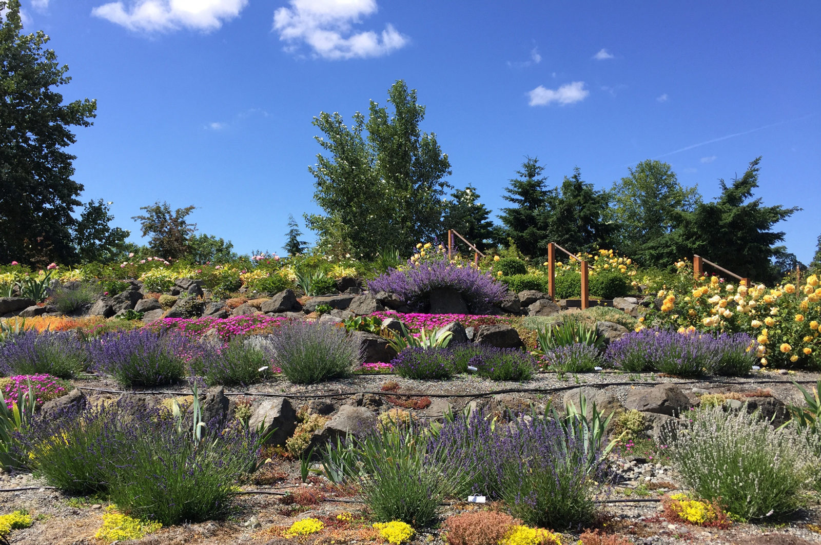The Sequim Botanical Garden Terrace Garden by Renne Emiko Brock